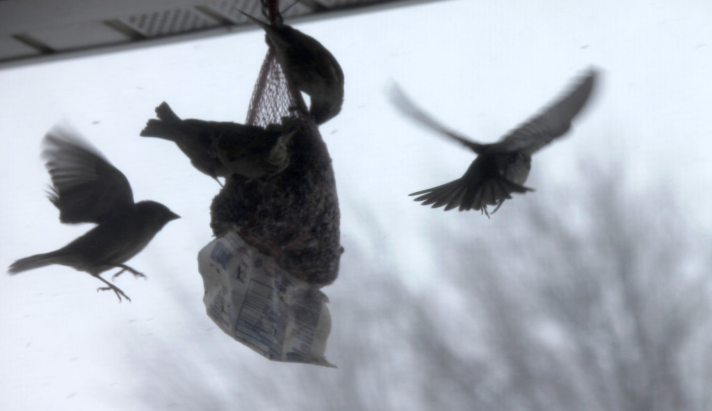 Birds enjoying homemade suet on porch